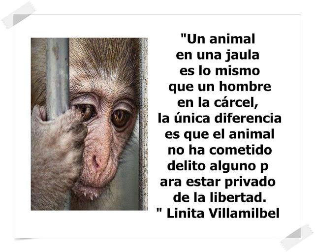 Dile No Al Maltrato Animal