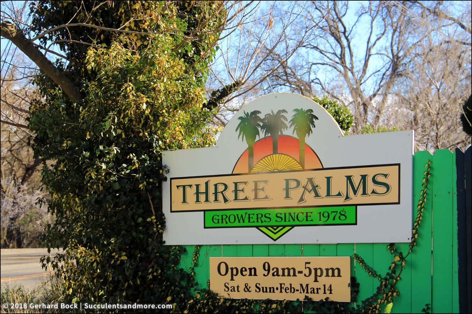 A Few Years Ago Phil Started To Bring In Plants From Mountain States Whole Nursery Glendale Arizona Expand Three Palms Water Wise Selections
