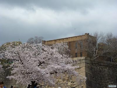 桜と元博物館