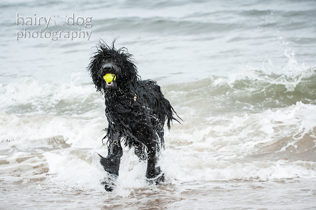 Hairy Dog Photography in Aberdeen