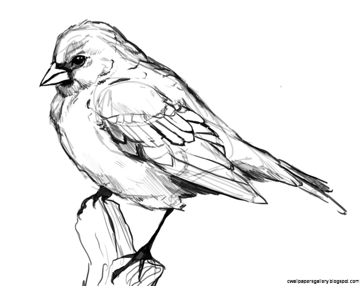 Bird Drawings Tumblr | Wallpapers Gallery