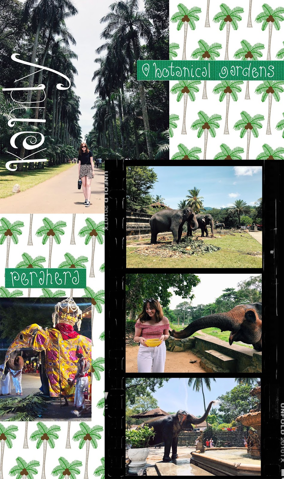 a collage of photos from Kandy, including palm trees at the botanical gardens and elephants, including perahera elephants, on an illustrated palm tree print background