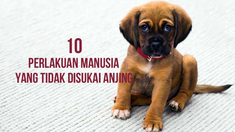 10 hal yang tidak disukai anjing