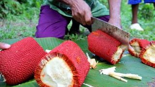 Fakta Menarik Buah Merah Serta Kemanfaatannya Untuk Kesehatan,  Buah Asal Tanah Papua dengan 3 Tingkat Antioksidan
