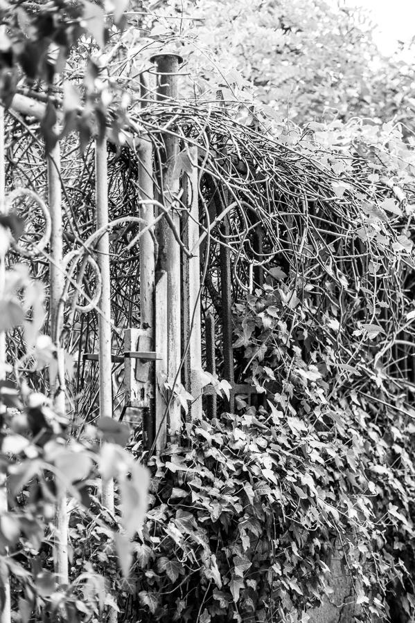 Blog + Fotografie by it's me! | fim.works | SchwarzWeissBlick No 20 | klassizistische Kirche von Schinkel | mit Efeu zugewachsenes Gartentor