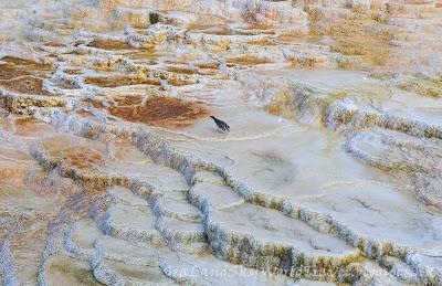 黃石國家公園, Mammoth Hot Springs, yellowstone national park