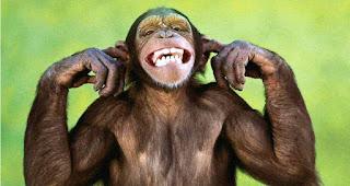 Monkey Facts In Hindi-Bandaro Se Judi Rochak Jankari