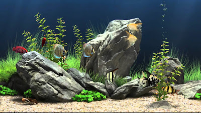 Free Virtual Fish Aquarium Download
