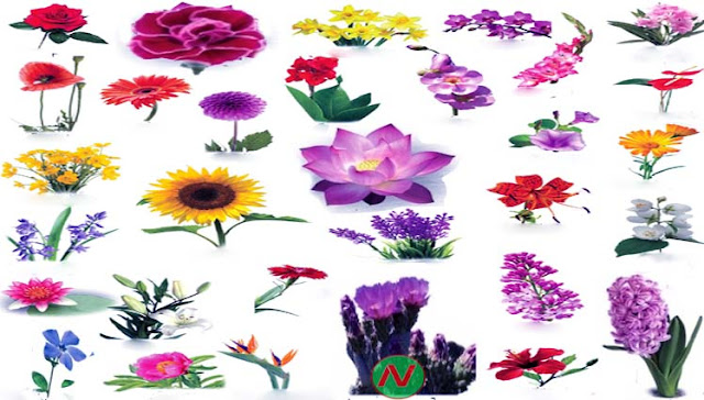 flowers name with relevant necessary vocabulary  word meaning, Beautiful flower