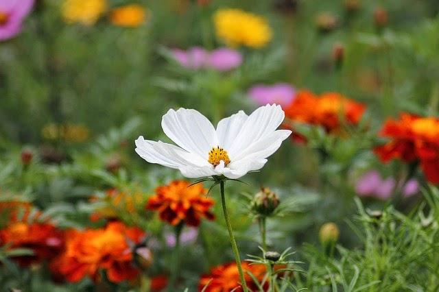 flor blanca perdón