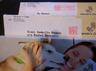 my dogs got mail