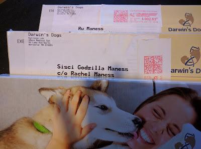 my dogs got mail