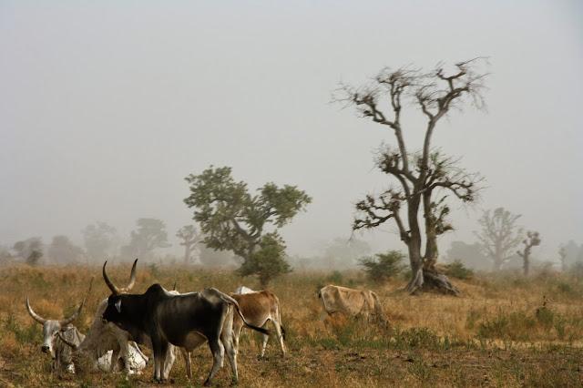 Droog landschap Senegal