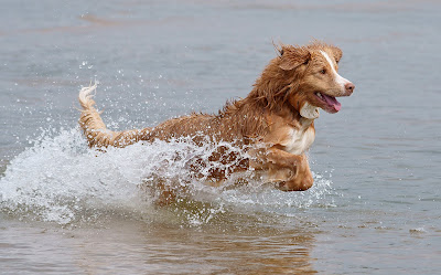Common Dog Diseases, Illnesses and Conditions