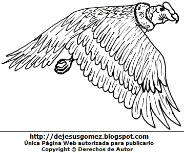 Imagen de un cóndor en pleno vuelo para colorear pintar e imprimor. Dibujo del condor de Jesus Gómez