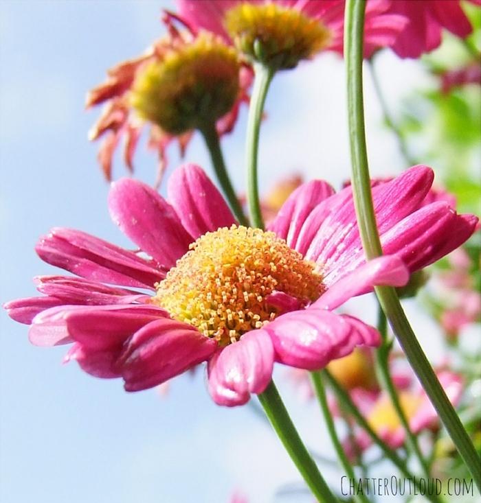 spring-flower-spring-has-sprung