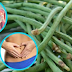 Various Health Benefits Of String Beans That You Should Really Know
