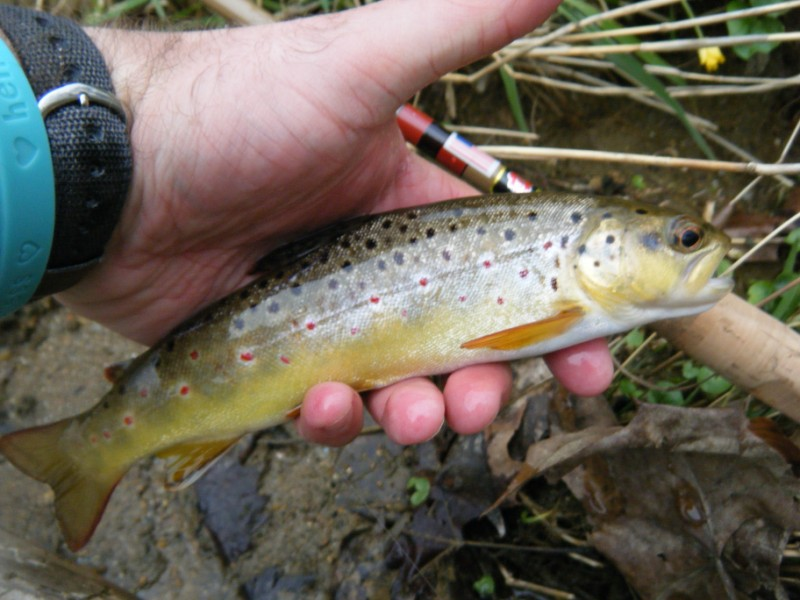 1587c71b2d1 Troutrageous! Fly Fishing   Tenkara Blog  Tenkara