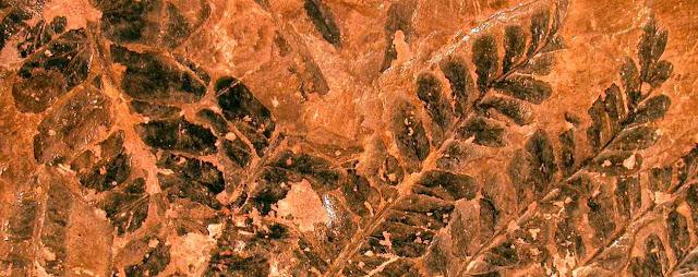 Plantas fosiles y reino vegetal