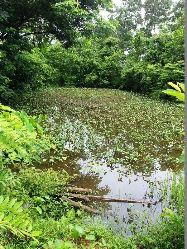 Regenwasser Sammeln Leben Auf Dem Land