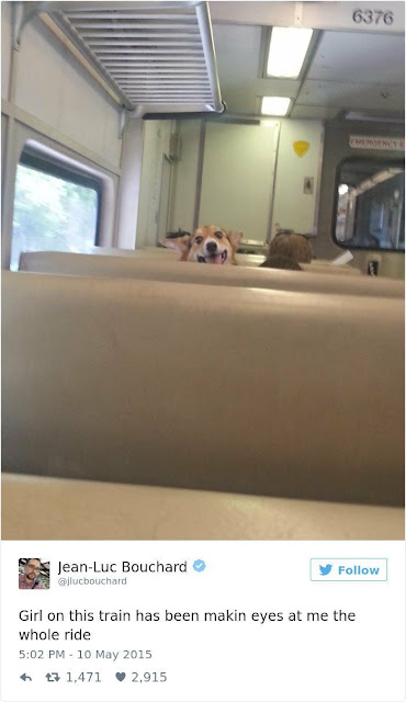Happy dog on the train looking over the seat. Attraction is Breed Specific. marchmatron.com