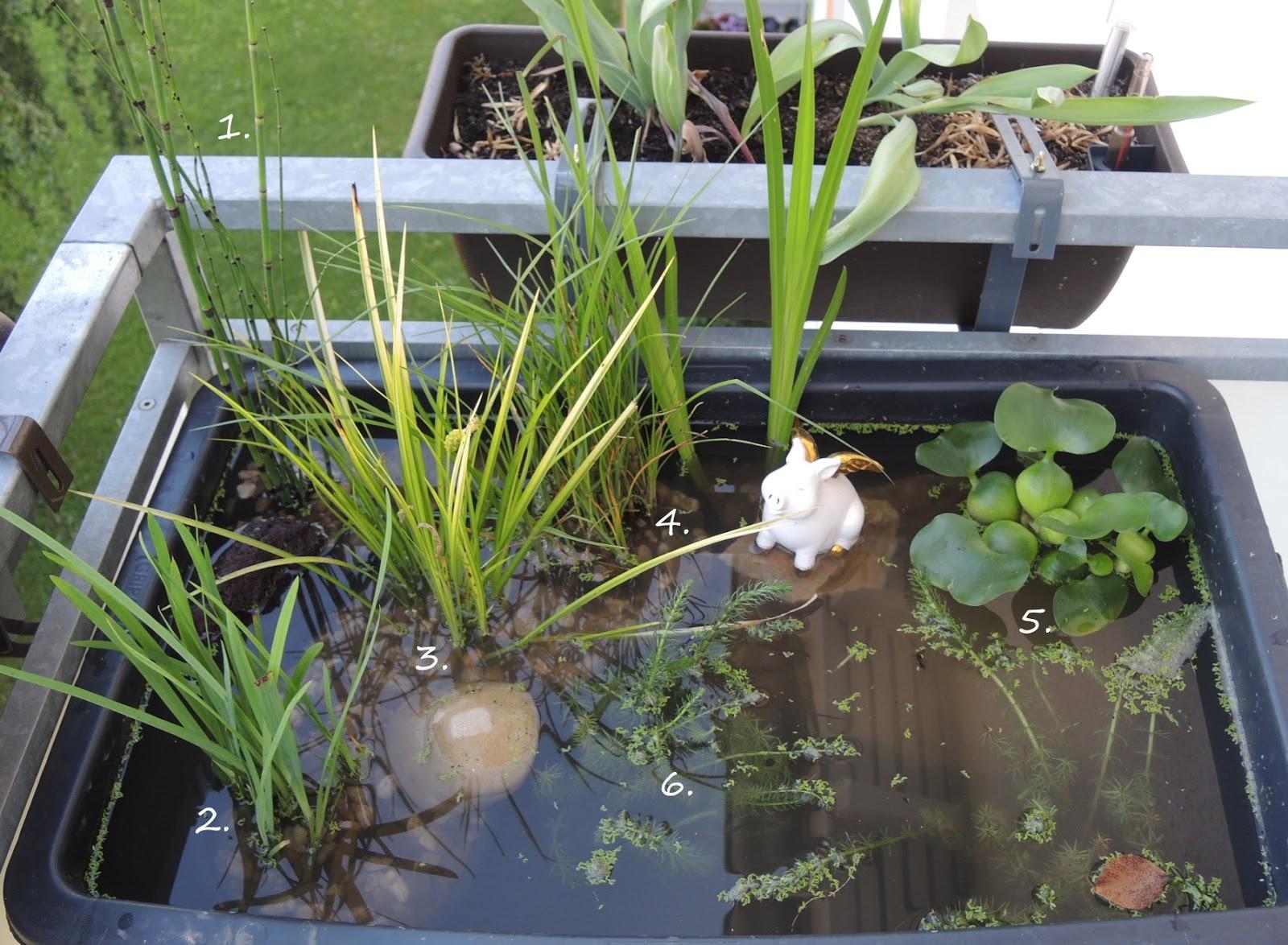 Water World Der Mini Teich
