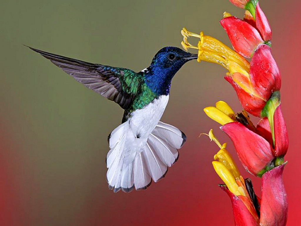 Beautiful Pictures Of Flowers And Butterflies Birds Flowers For Flower Lovers Flowers And Birds Beautiful