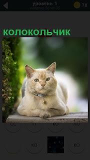 На скамейке лежит кошка с ошейником, на котором укреплен колокольчик
