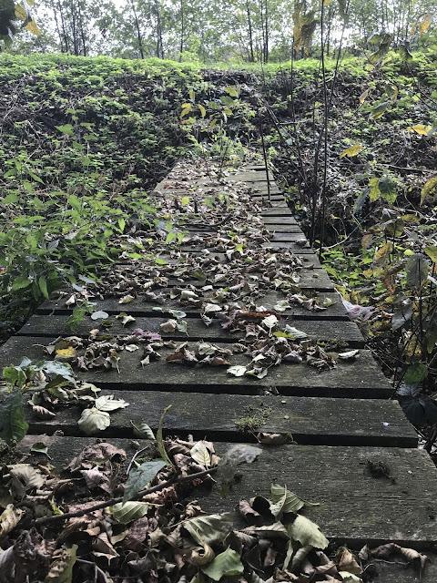 Steg über Bach mit Herbstlaub - Herbst am Karpfenweiher