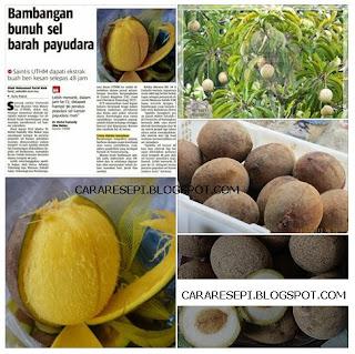 Khasiat Buah Bambangan Sabah