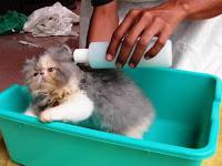 5 Tips Melakukan Grooming Kucing Sendiri di Rumah