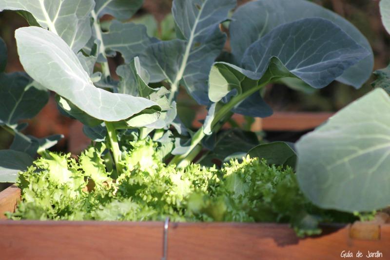 Escarola y brócoli