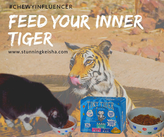 Feed Your Inner Tiger #ChewyInfluencer