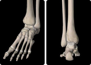 Ankle injuries (images of a left foot and ankle complex, anterior and posterior)