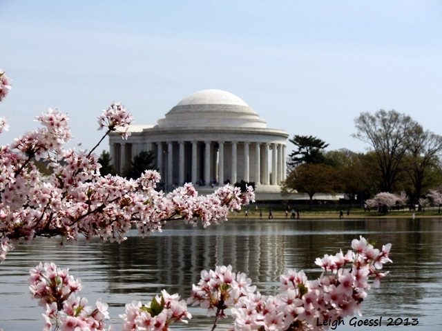 cherry blossom peak views DC