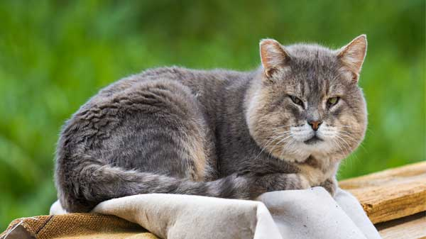 Behavior of cat changes with age