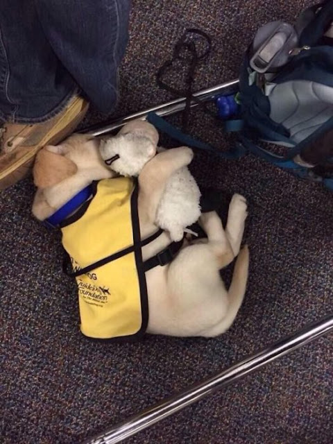 15 Cachorritos en su primer día de trabajo… ¡No te atrevas a reírte de ellos!