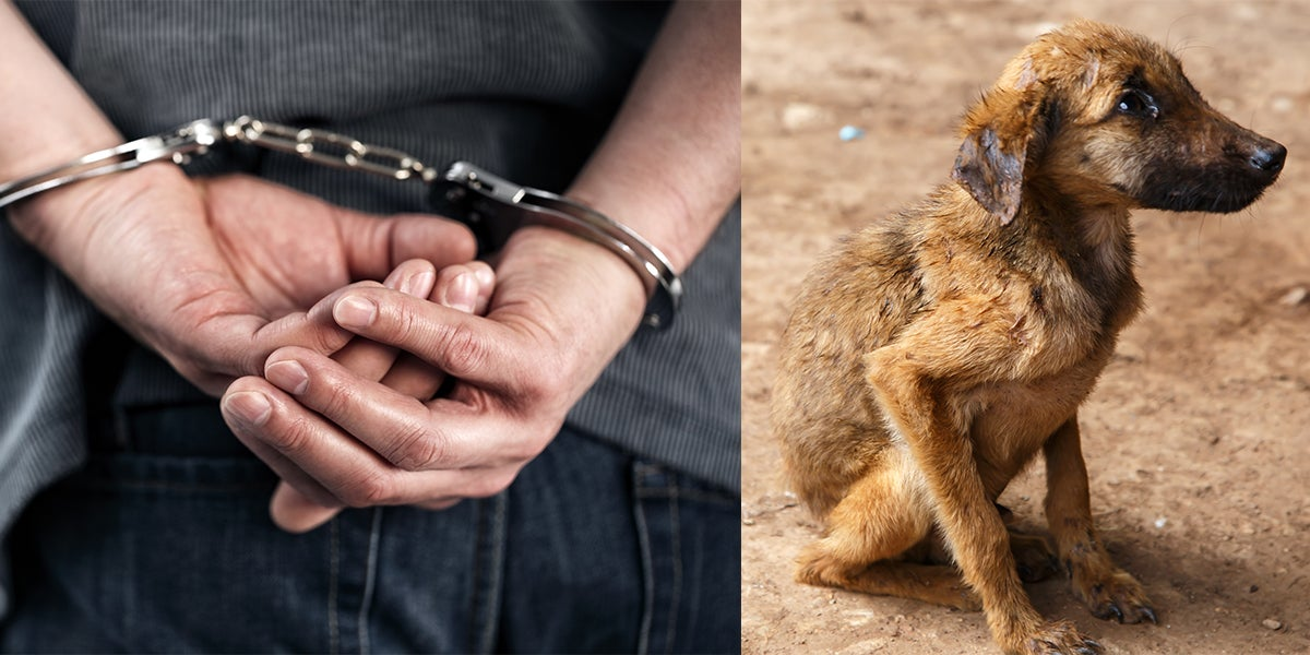 Prison Sentences For Animal Cruelty Might Rise From 6 Months To 5 Years In The United Kingdom