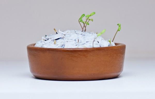 Autossustentável: Papel Semente