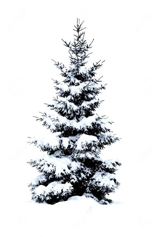 Christmas Tree White Background.Snow Tree White Wallpapers Awards