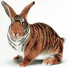 La victoriosa estratagema de aparentar. Conejo disfrazado de tigre