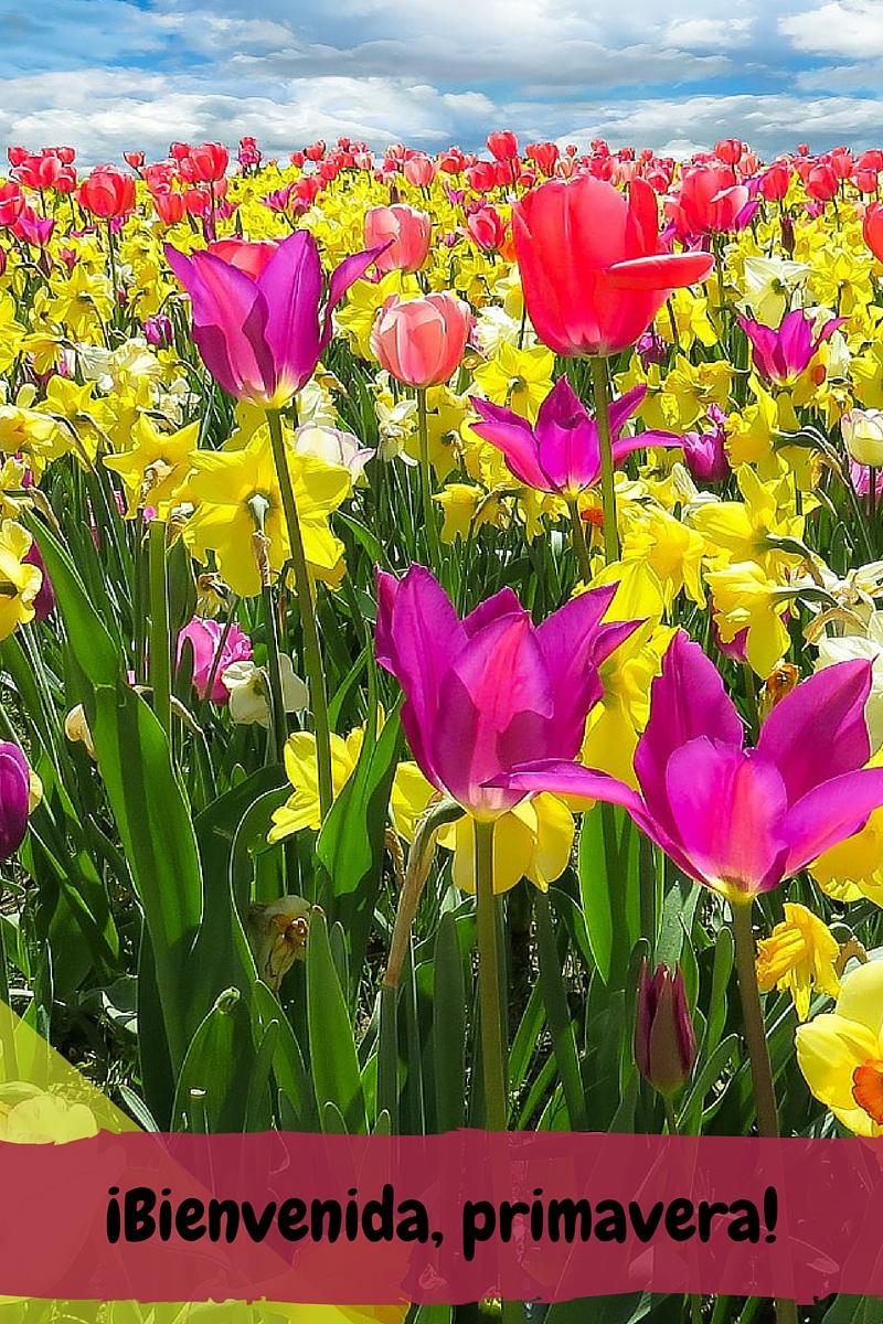 La primavera por fin ha llegado