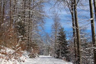 Nordschwarzwald - Winter