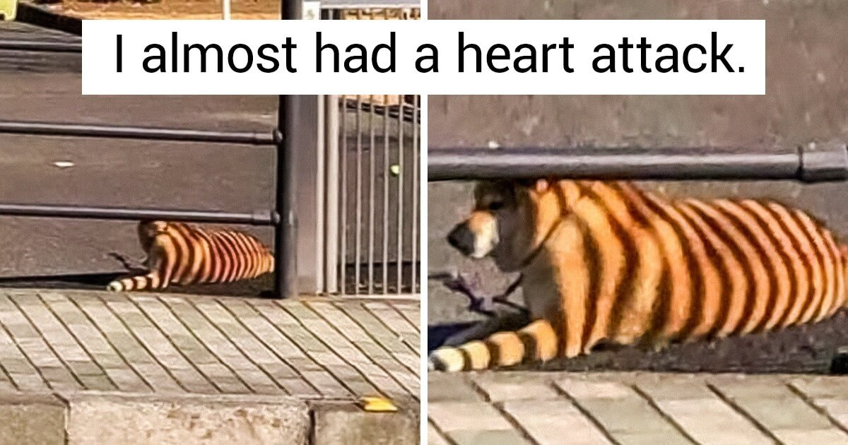 20 Ironic Photos Prove How Life Can Get Hilariously Unlucky