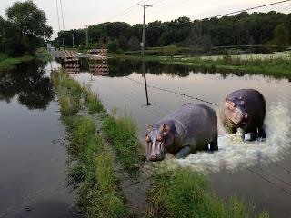 Plan B Hippo Gramsie Road