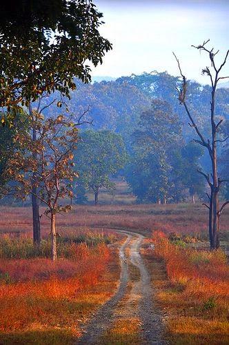 Satpura National Park, India 10 Worlds Amazing And Beautiful Forests
