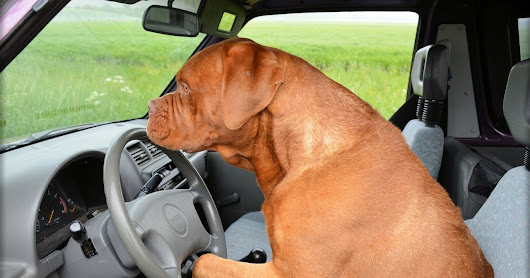 3 Tips for Road Trips with Your Dog