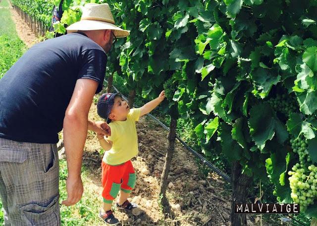 lagravera vinya enoturisme