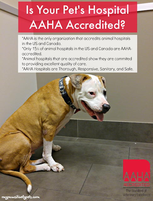 Animal hospitals that choose to become accredited by AAHA show they are committed to meeting or exceeding standards in a variety of different areas.