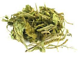Daun sendok ialah salah satu tumbuhan liar yang bisa kita temui di pekarangan rumah ya Daun sendok (Plantago mayor L)